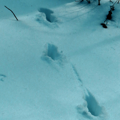 deer-running